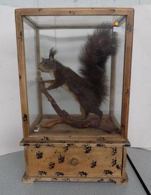 Taxidermy of Red Squirrel