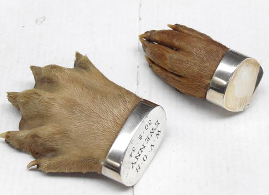 Two x taxidermy otter's paw brooches, both silver mounted, 1922 & 1934
