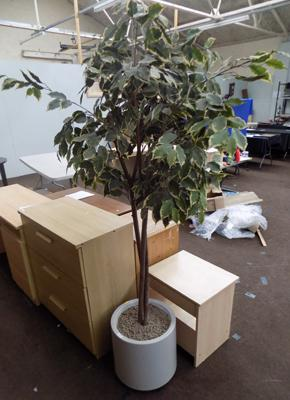 Art - office tree plant