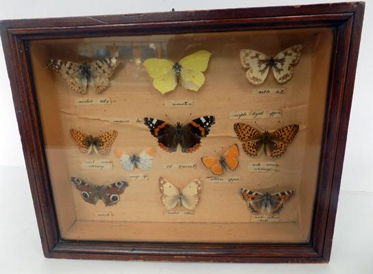 Vintage butterfly display
