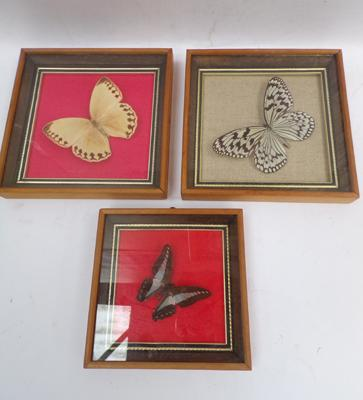3x Sets of butterfly pictures