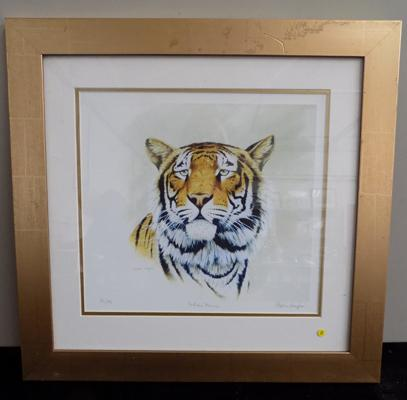 """Tiger"" signed print - Indian Prince - 19 1/2"" x 19"""