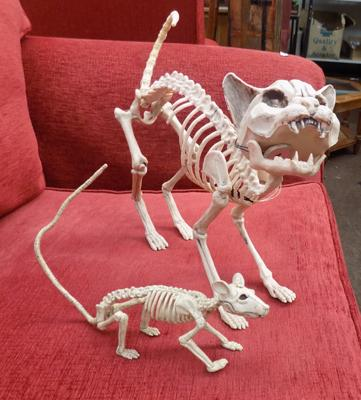 Skeleton replica of a cat and a rat