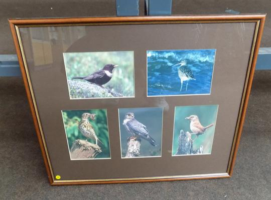 Framed wild birds prints by Mark Hamblin - 16 3/4 inches by 14 1/4 inches
