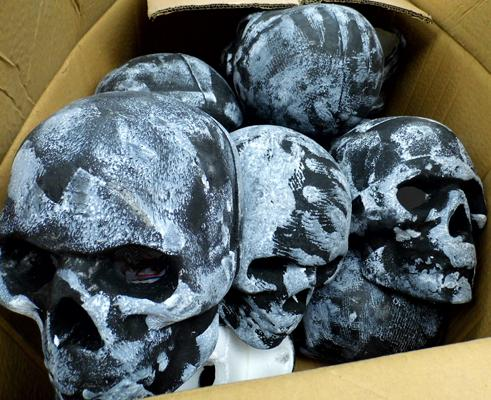 Box of life size display skulls