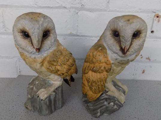 Pair of owls, glass eyes, good condition