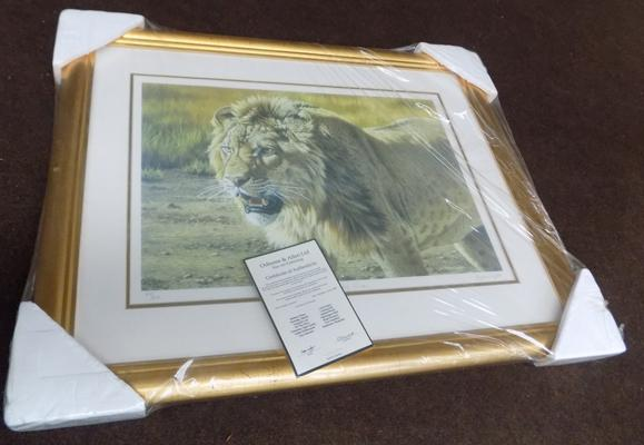 Lion print in frame